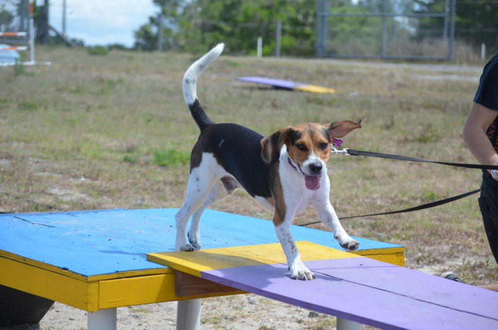 Group Dog Training Classes