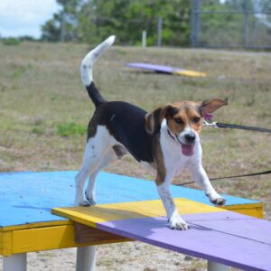 Group Dog Training Classes